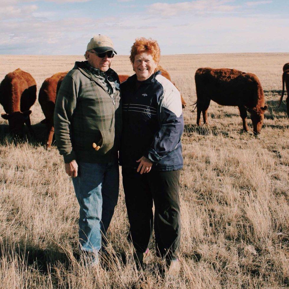 ranching in an oilfield